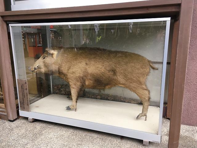 「護王神社」猪