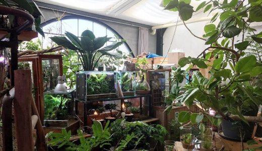 Cotoha(コトハ) JR二条駅すぐ!広くてオシャレでのんびりできる観葉植物のお店