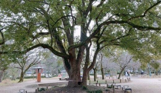京都御苑 児童公園|京都のど真ん中で自然を感じられる公園!ゆっくりとした時間が流れてます